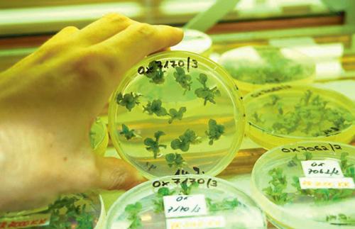18-env-OGM-Mutagénèse-