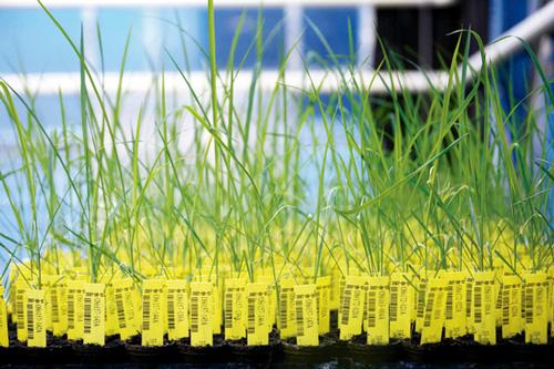 18-env-OGM-plantes-in-vitro-dans-laboratoire-